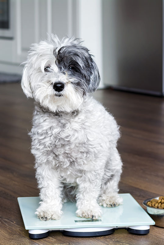 dog on scale with food