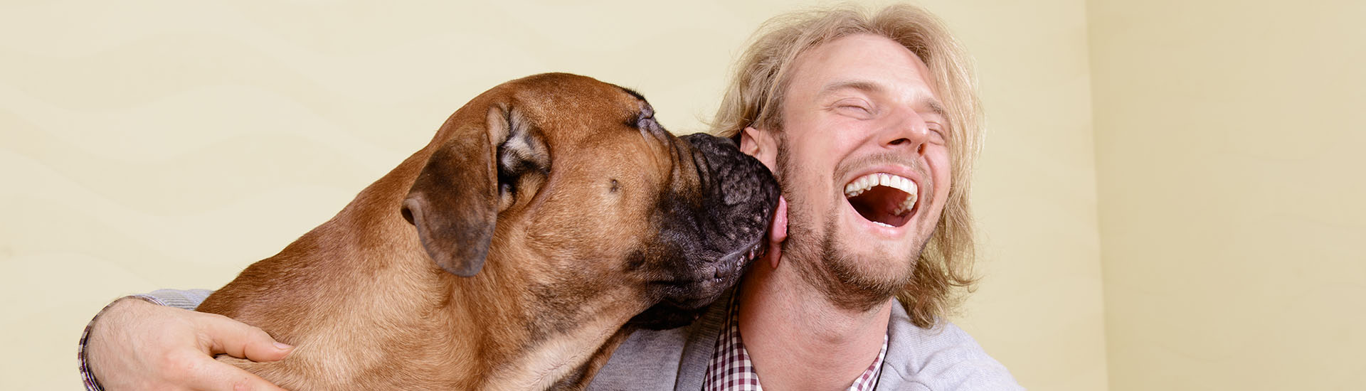 young man at home playing with a big bullmastiff dog. positively laugh
